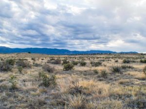 40 Acres in Florence, CO 81226